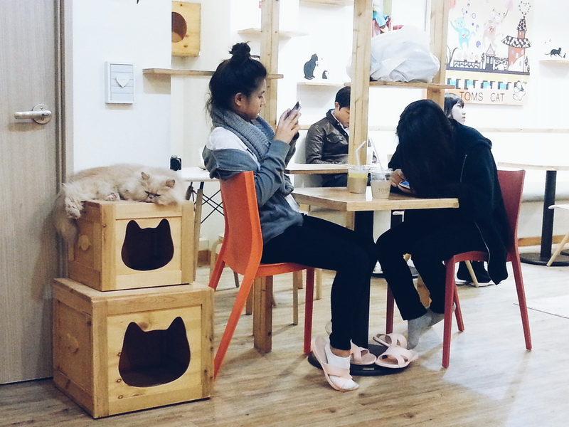 Бизнес-план кафе с кошками