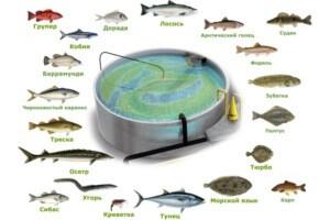 Виды рыбы для разведения