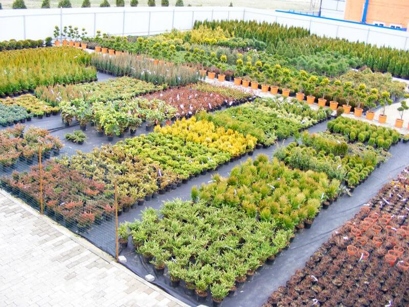 Бизнес-план питомника растений