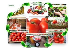Процесс выращивания овощей на продажу