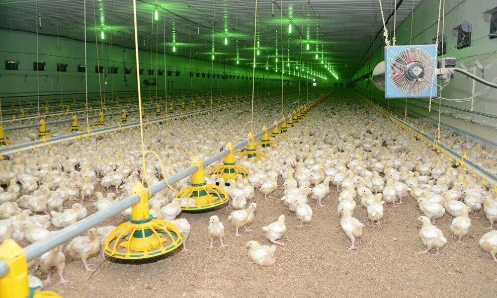 Бизнес план птица фермы открытие фирмы сро