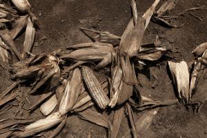 Риск потери урожая