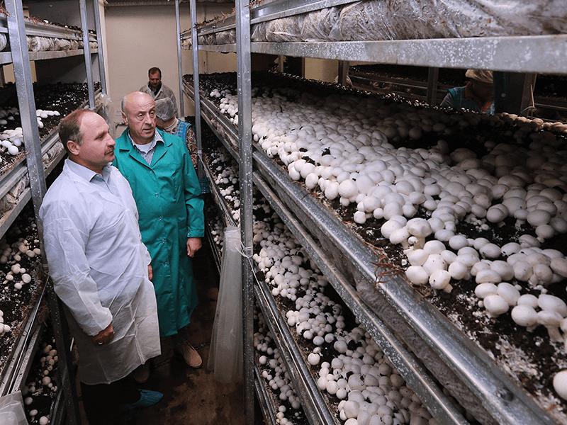Семейный бизнес на грибной ферме