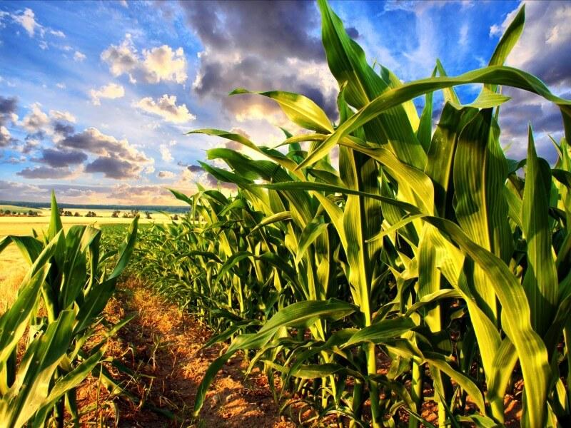 Растениеводство как бизнес