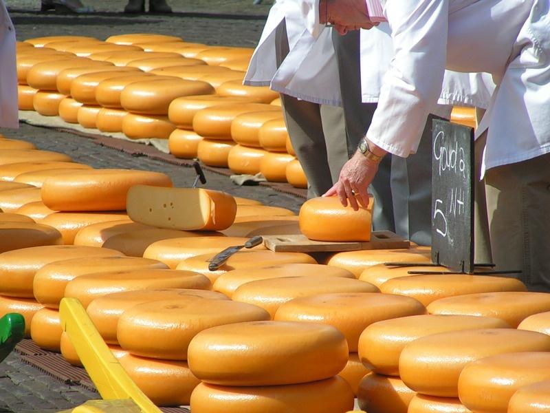 Бизнес-план по производству сыра: с чего начать