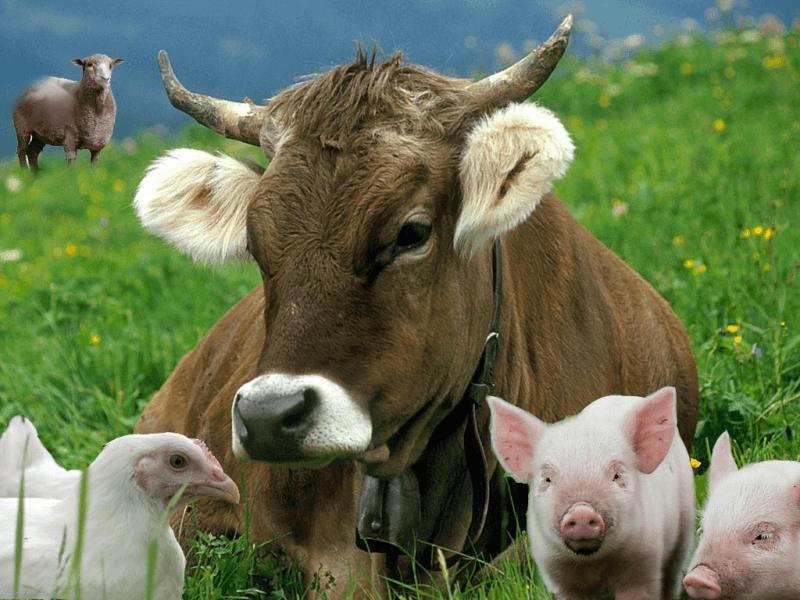 Бизнес-план скотоводства