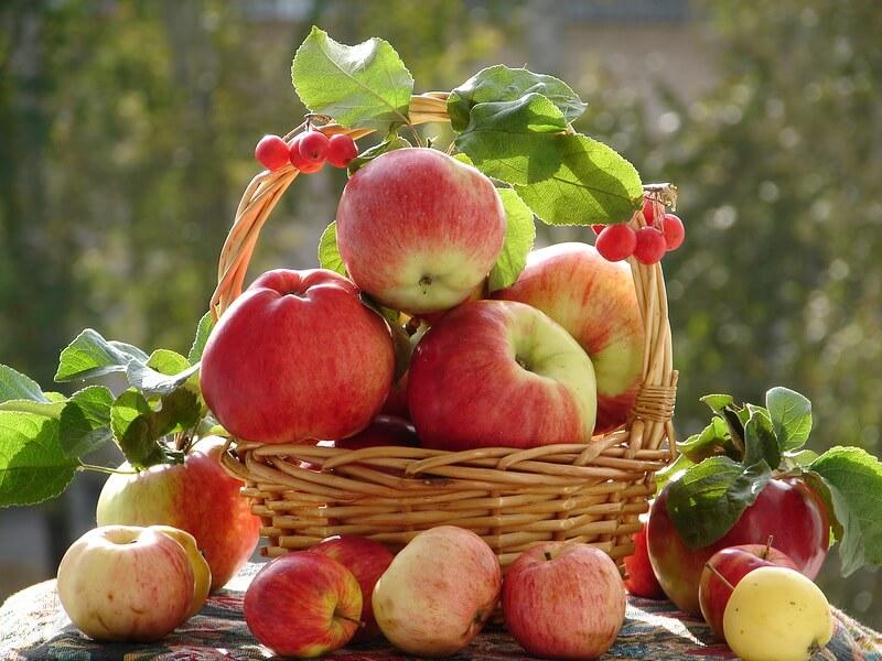 Посадка интенсивного сада яблоня
